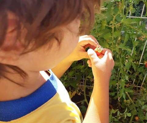 El huerto en una Escuela Infantil en las Rozas